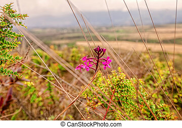 Wild Orchids Purple, Flowers Moving In The Wind