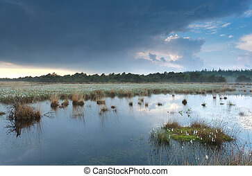 cloudy rainy sky reflected in swamp water