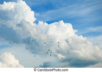 Cloudy sky with flying pigeons