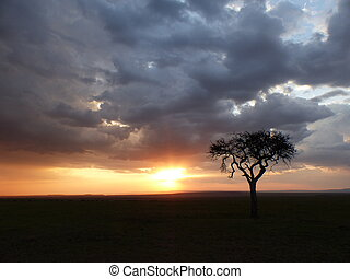 Cloudy sunset in the savannah