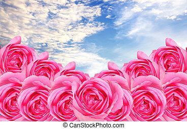 clounds in blue sky with pink rose