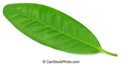 Clove leaf over white background