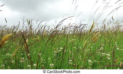 clover and grass growing on meadow or field 50 - nature,...