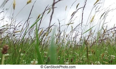 clover and grass growing on meadow or field 51 - nature,...