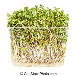 clover and radish sprouts in a transparent plastic container isolated on white