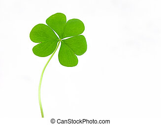 Close up of clover plant on white background