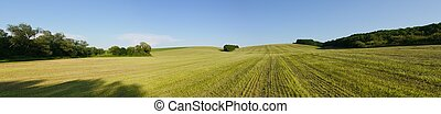 Clover field after harvesting