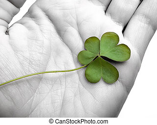 clover in the hand , can be used as concept for luck related...