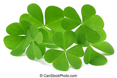 Clover leaf with selective focus