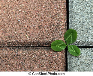 clover on the stone pavement