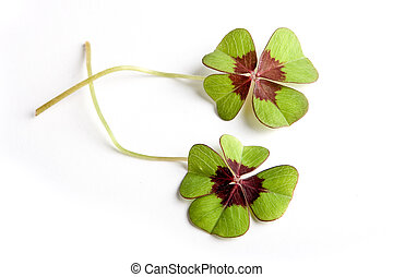 Clover with clipping path