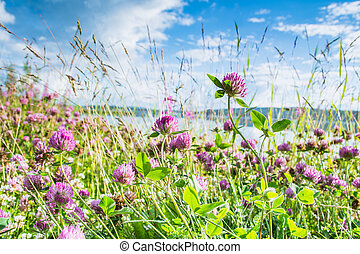 Clovers on a bright green and blue sky background