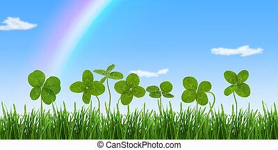 clovers, szczelnie-do góry, strzał, field., cztery-liścia