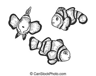 Clown fish Amphiprion sketch engraving vector illustration. T-shirt apparel print design. Scratch board style imitation. Black and white hand drawn image.