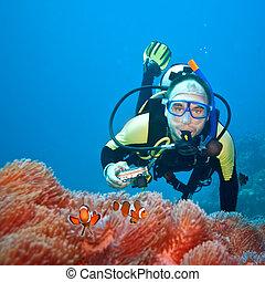 clownfishes, 以及, 攝影師