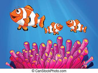 clownfishes, morze, pod
