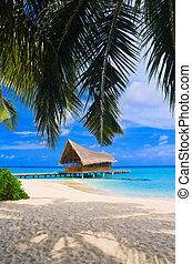 clube, ilha, mergulhar, tropicais