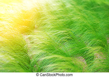 Clump of green grass on the field.