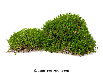 clumps of moss on a white background