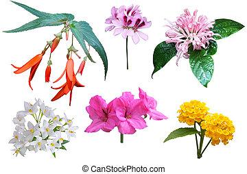 Cluster Flower Set