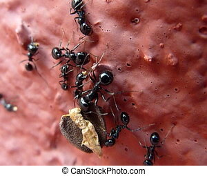 Cluster of ants.