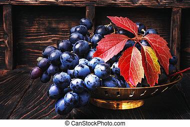cluster of autumn grape