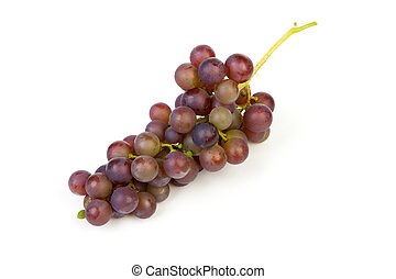 cluster of blue grapes