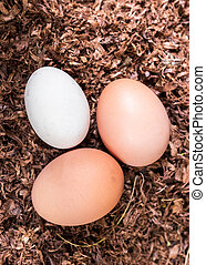 Clutch of Three Freshly Laid Eggs Vertical
