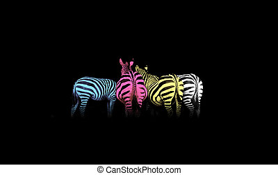 Cyan, magenta, yellow, and black (CMYK) colorful zebras (colored life)