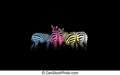 cmyk, gekleurde, zebras