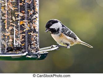 Coal Tit on a bird feeder.