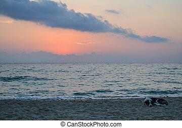 Coast. Early morning. Dog sleeping on the beach. Greece