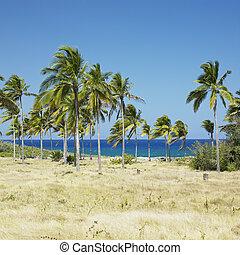 coast of Bahia de Bariay, Cuba
