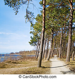 Coast of Baltic sea, a sunny day