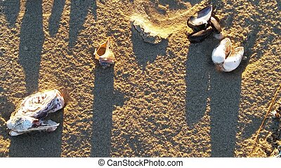Clams, oysters and mussels with starfish on yellow sand. -...