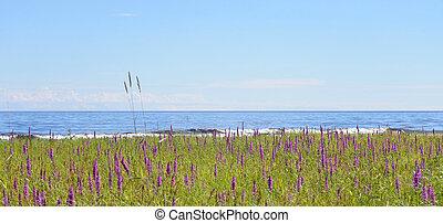 Coast of lake.