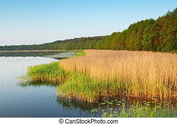 Coast of lake