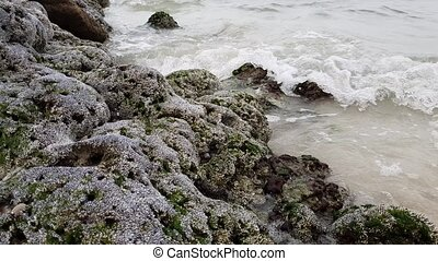 coast of Persian Gulf is covered with shell rock. - The...