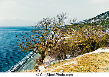 Coast of the Black Sea