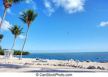 Detail of the wonderful Florida Coast in Islamorada
