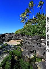 coast with rocks and palm trees