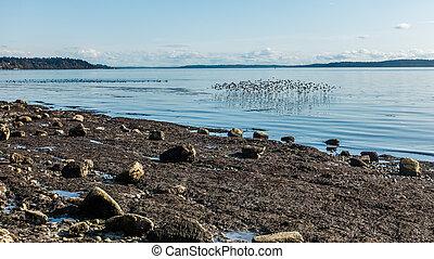 Coastal Birds 4