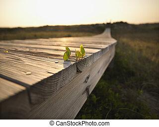 Coastal boardwalk.