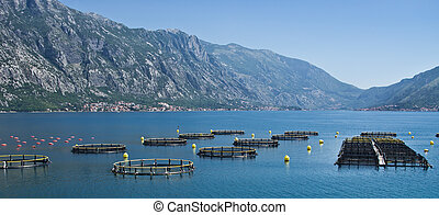 Coastal fish farming in Montenegro