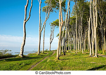 Coastal forest at the Baltic Sea in Germany
