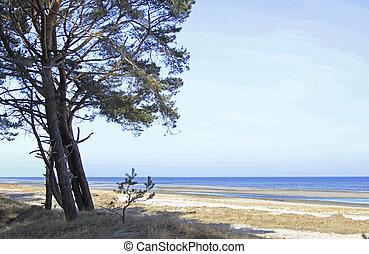Coastal Forest on the Island Usedom, Germany