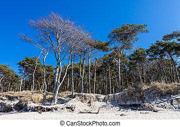 Coastal forest on the Baltic Sea coast.