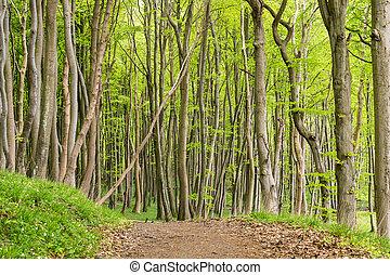 Coastal forest on the island Ruegen (Germany).