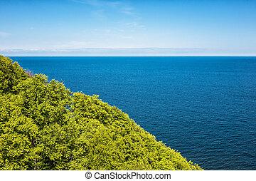 Coastal forest on the island Ruegen in Germany.