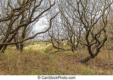 coastal forest scenery near Domburg in Zeeland, a province in the Netherlands at winter time
